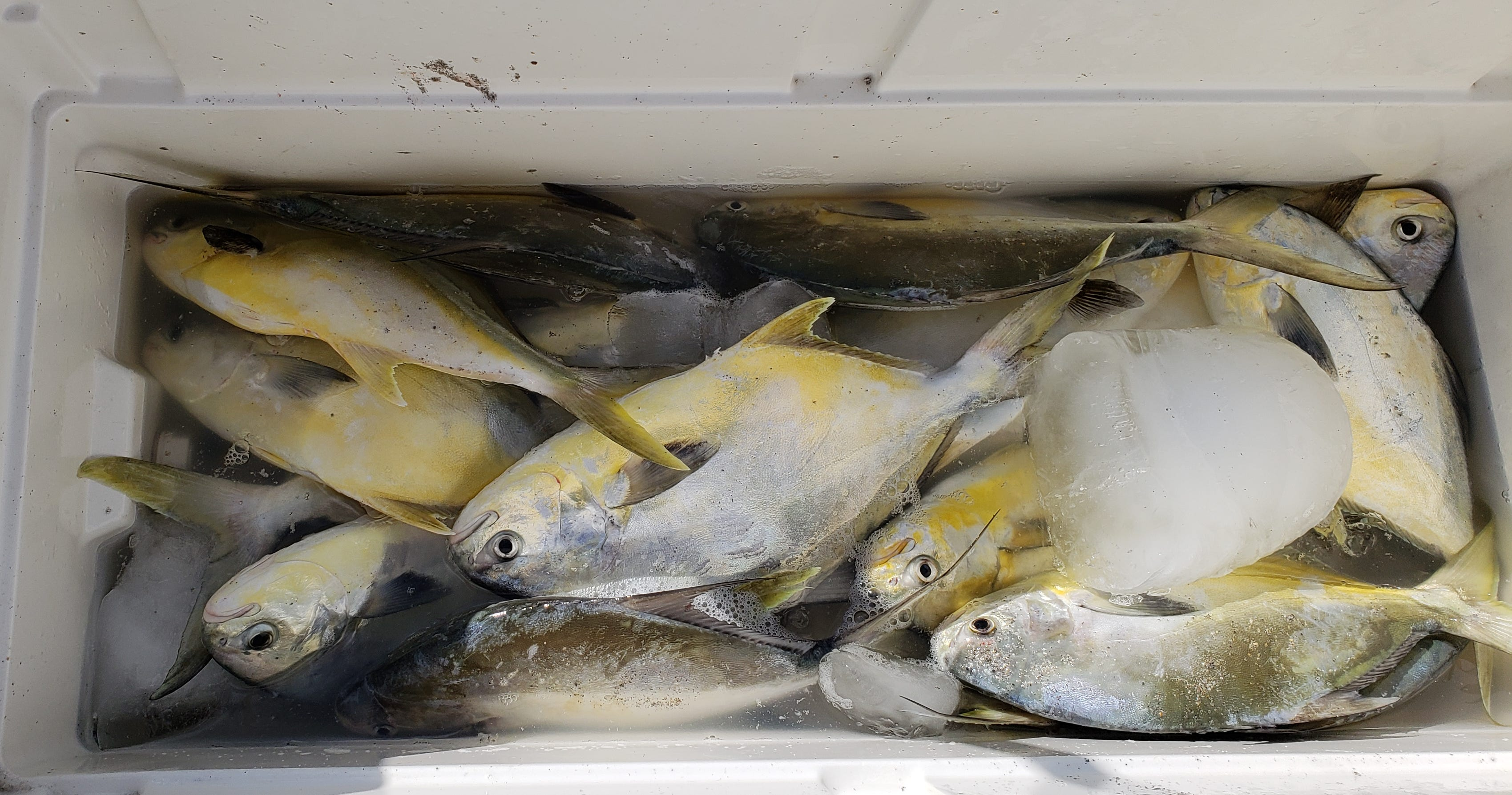 Pompano have been the target species for surf anglers along the Space Coast the past week.