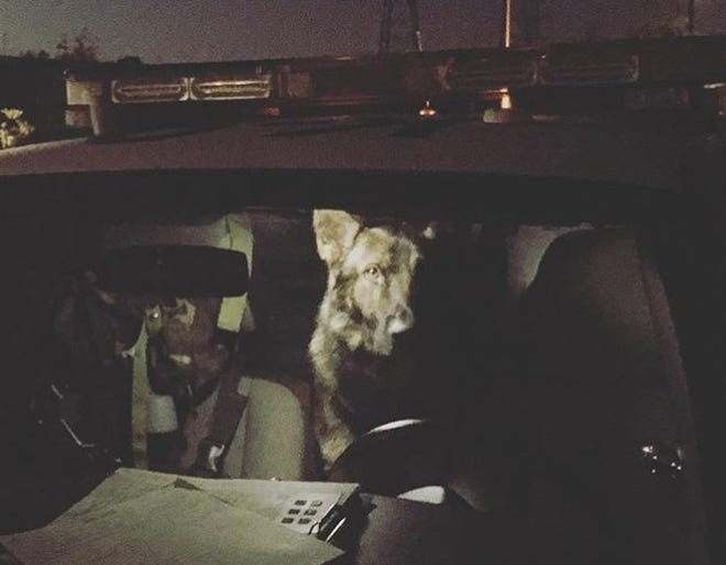 Miles, a Ventura Police dog, sits in a patrol car in an image tweeted Sunday night by the department to remind residents to lock their cars. Some 17 thefts from vehicles were reported last week, officials said.