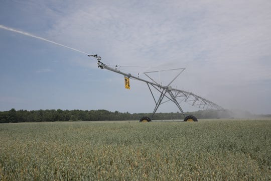 Valuable Antigo foundation seed oats are watered at Schumitsch Seed Inc.