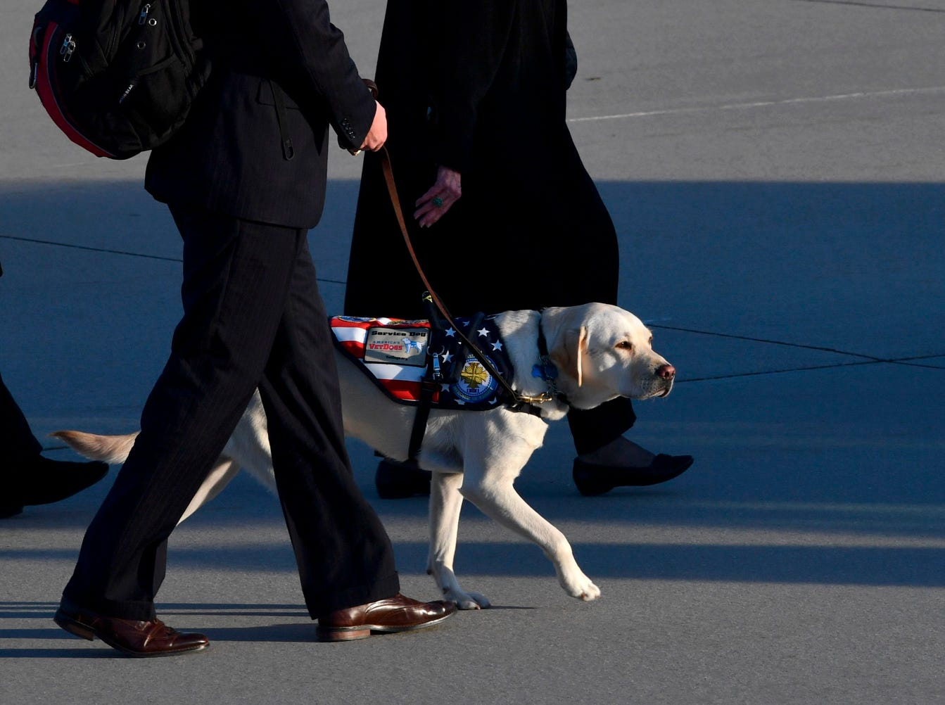 The yellow Labrador retriever Sully, the late former president's faithful service dog, walks on the tarmac after the flag-draped casket of former President George H.W. Bush was carried to a hearse.