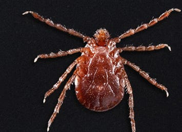 This invasive creepy-crawly has Tennessee surrounded. Are we next?