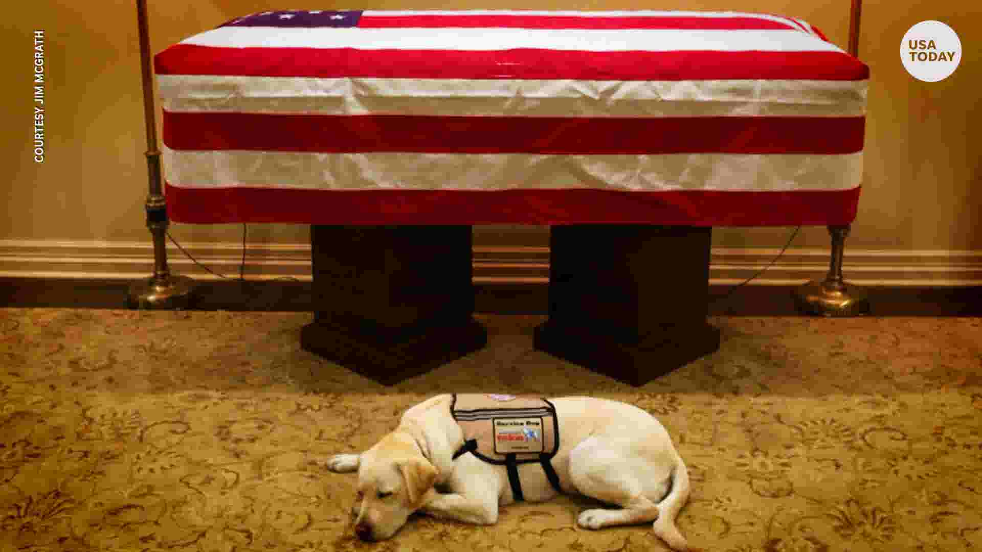 George H.W. Bush's service dog, Sully, loyal to the end