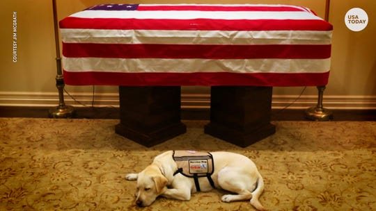 Bush 41's service dog, Sully, loyal to the end