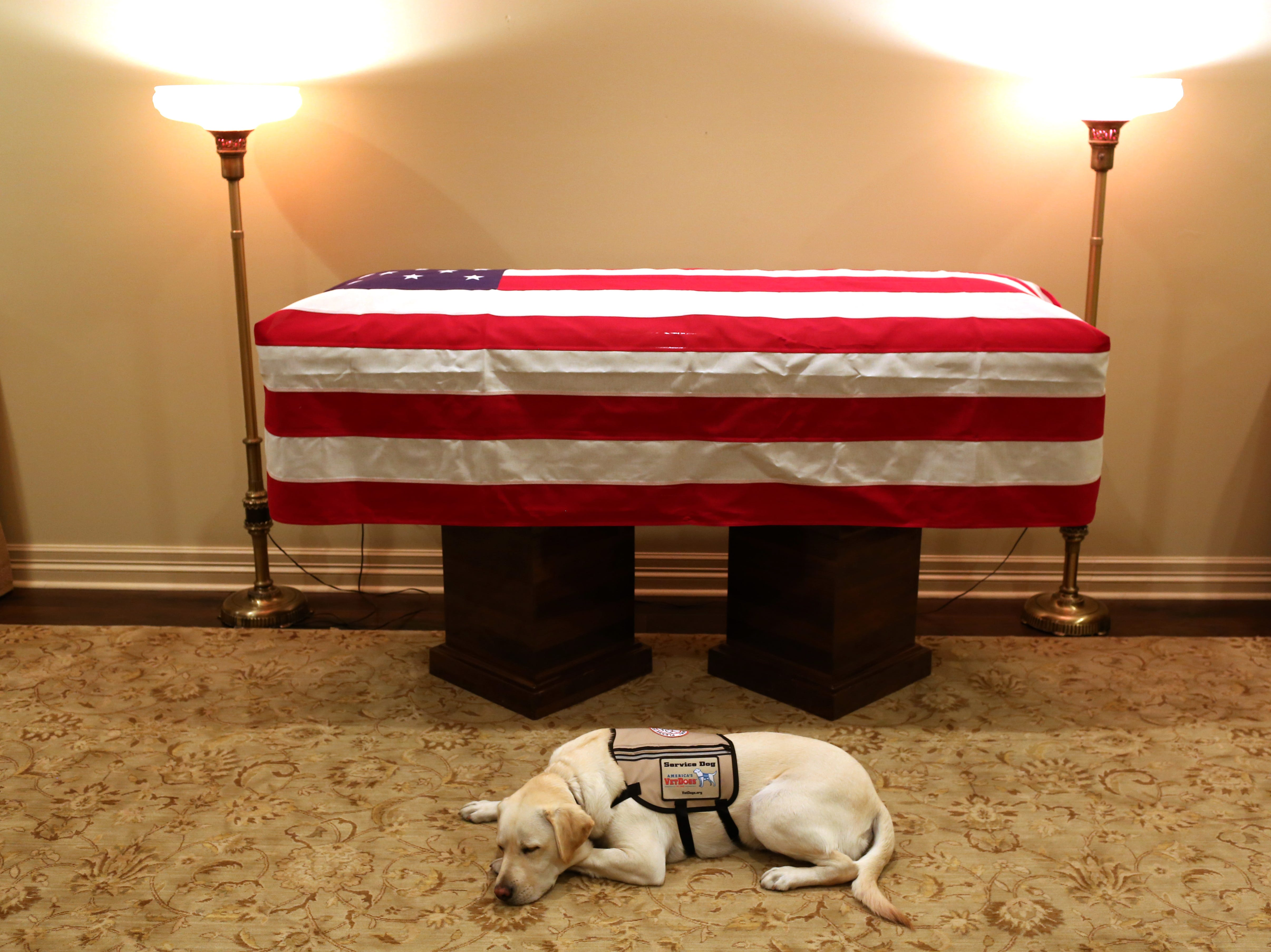 Former President George H.W. Bush's service dog, Sully, lying in front of his casket on Dec. 2, 2018.