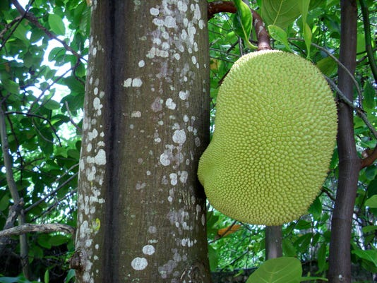 See how you can use this tropical fruit instead of meat during your next barbecue cook out