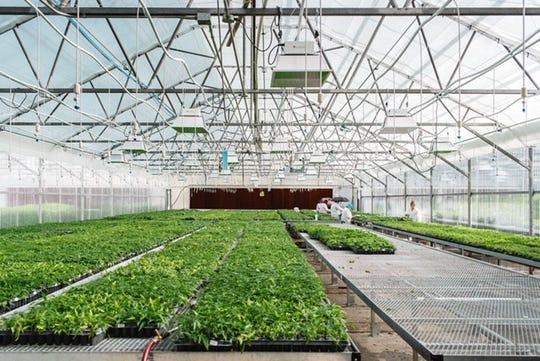 One of Front Range Biosciences' hemp greenhouses in Colorado.