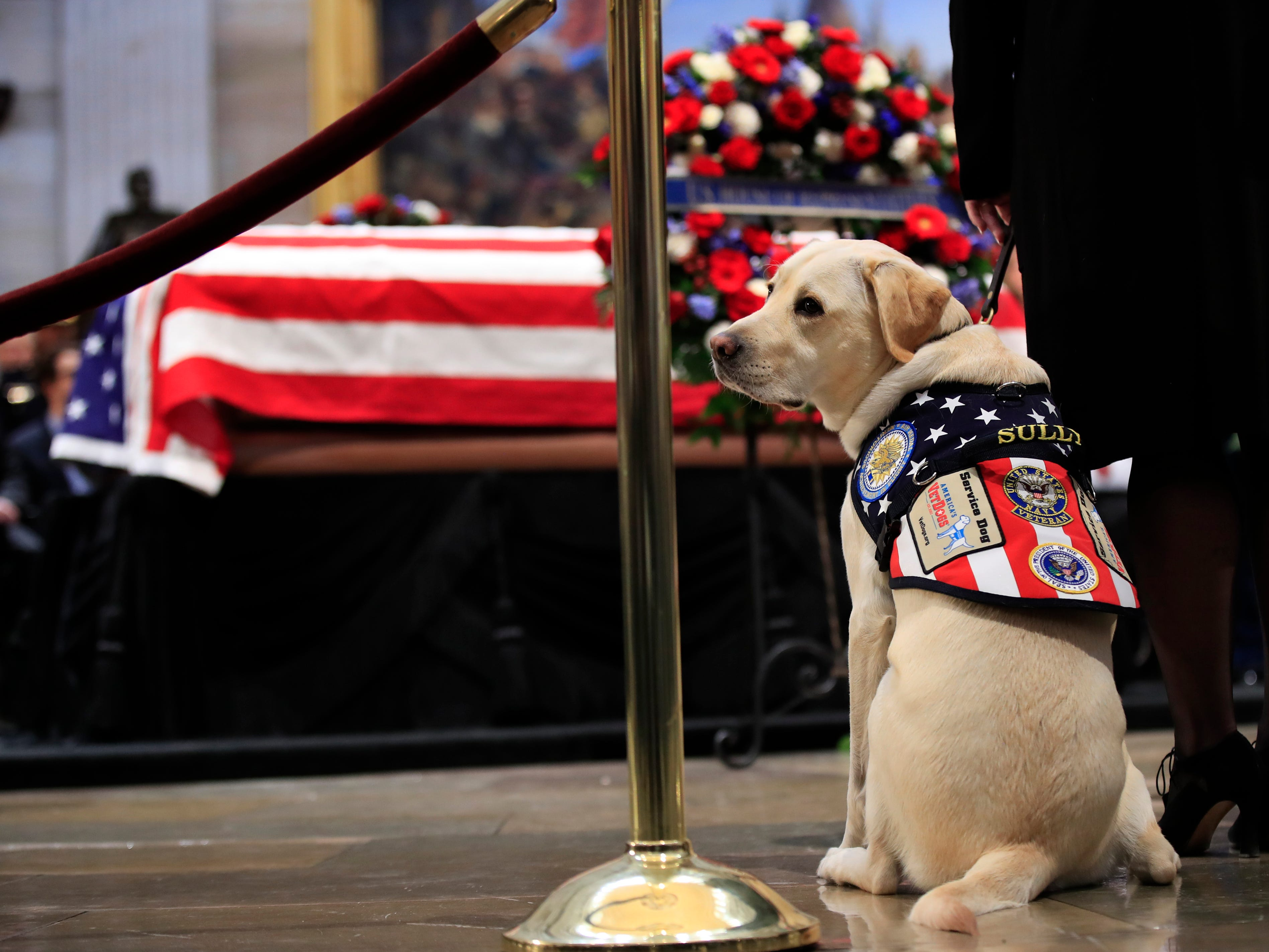 Sully, former President George H.W. Bush's service dog, pays his respect to President Bush as he lies in state at the U.S. Capitol in Washington, Tuesday, Dec. 4, 2018.