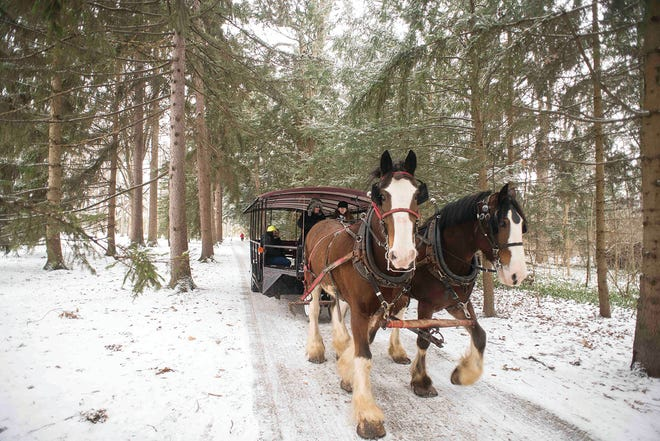 South Creek Clydesdales will return for horse drawn sleigh rides after Christmas 2018 at Spiegel Grove.