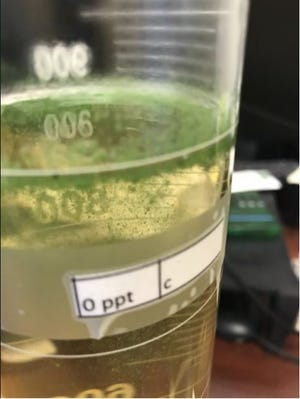 This image shows a sample from Lake Okeechobee that contains blue-green algae.