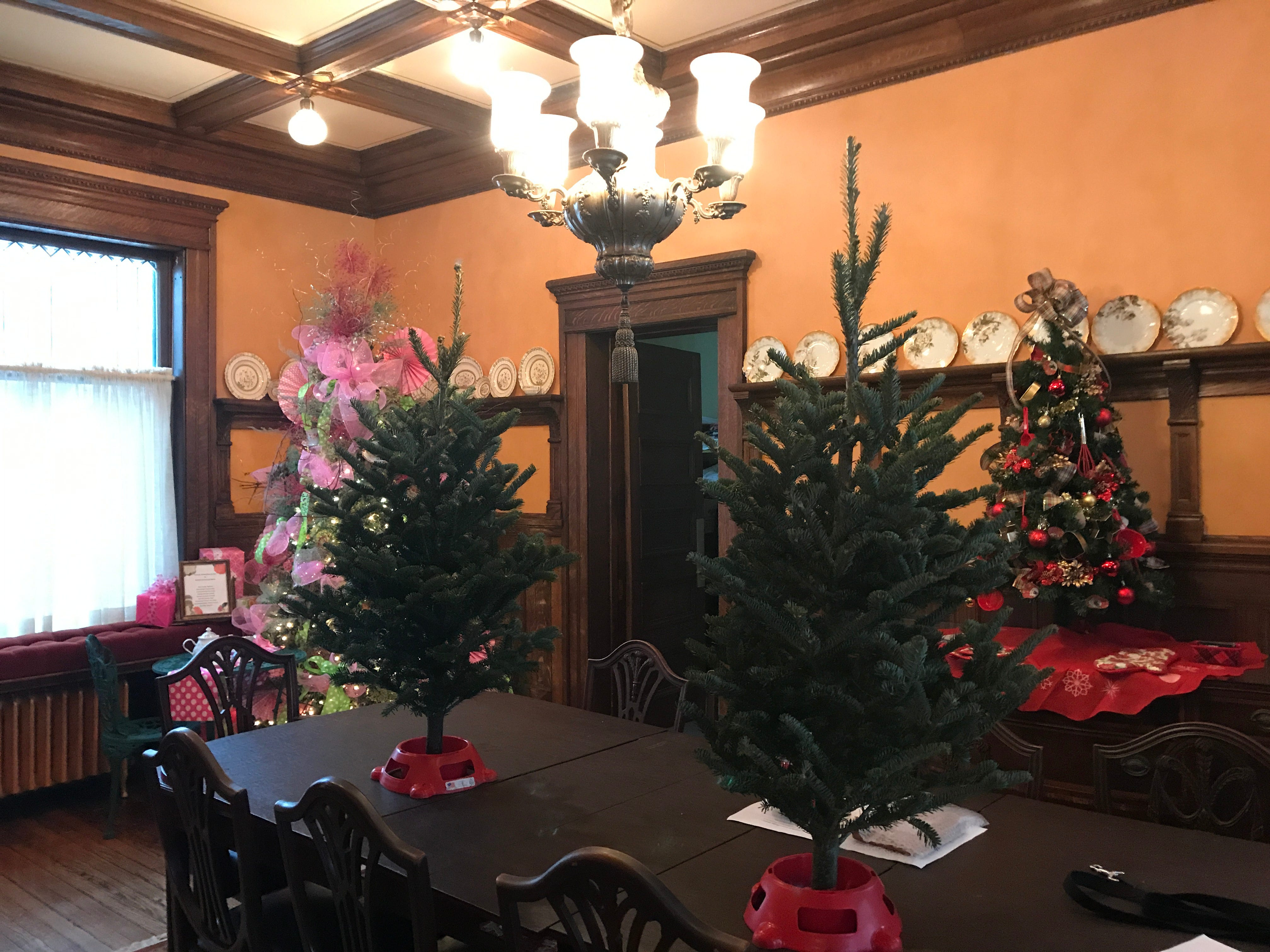 Tabletop trees await decorating of the 2018 Festival of Trees.