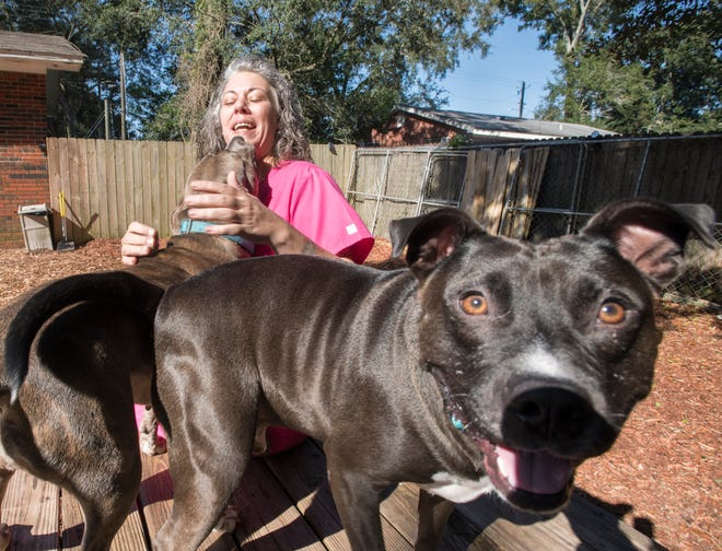 Marlena gives Carrie Turner doggie kisses as Ducky is more interested in mugging the camera at the Phoenix Rising Rescue & Adoption Center in Cantonment on Tuesday, December 4, 2018.