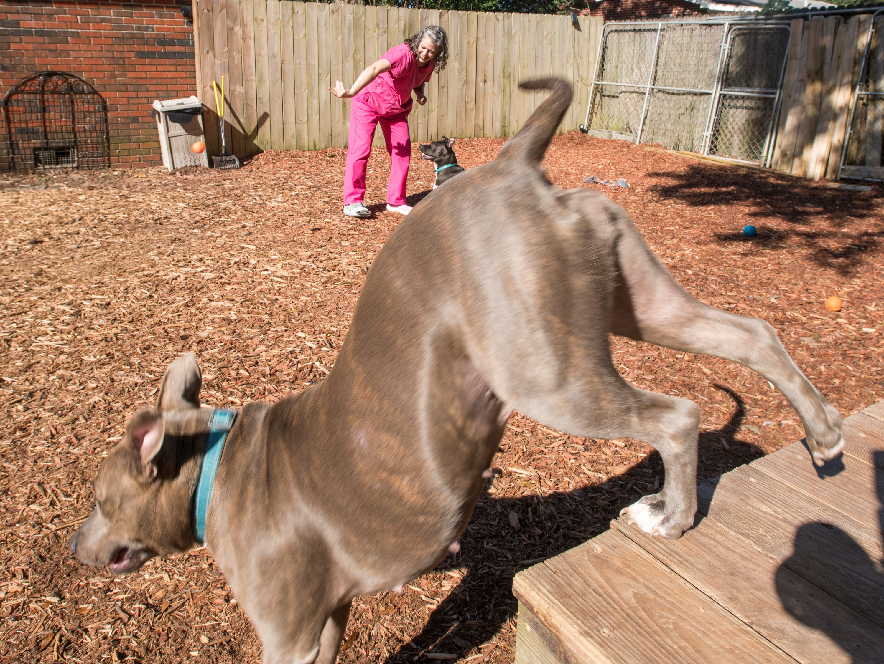Carrie Turner plays with Ducky, top, and Marlena in the backyard at the Phoenix Rising Rescue & Adoption Center in Cantonment on Tuesday, December 4, 2018.