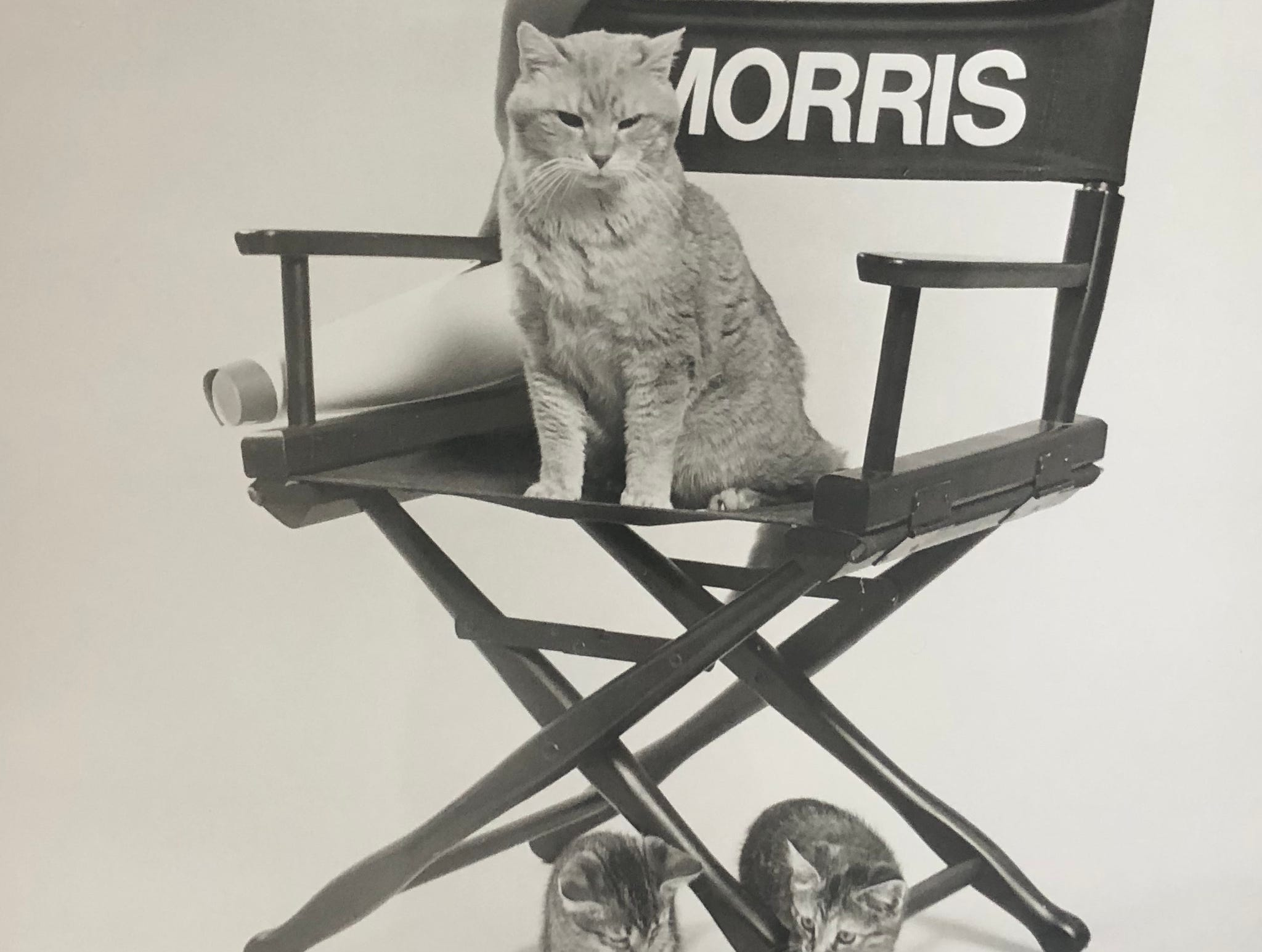 TV spokescat Morris the Cat once served as the Arizona Humane Society mascot.
