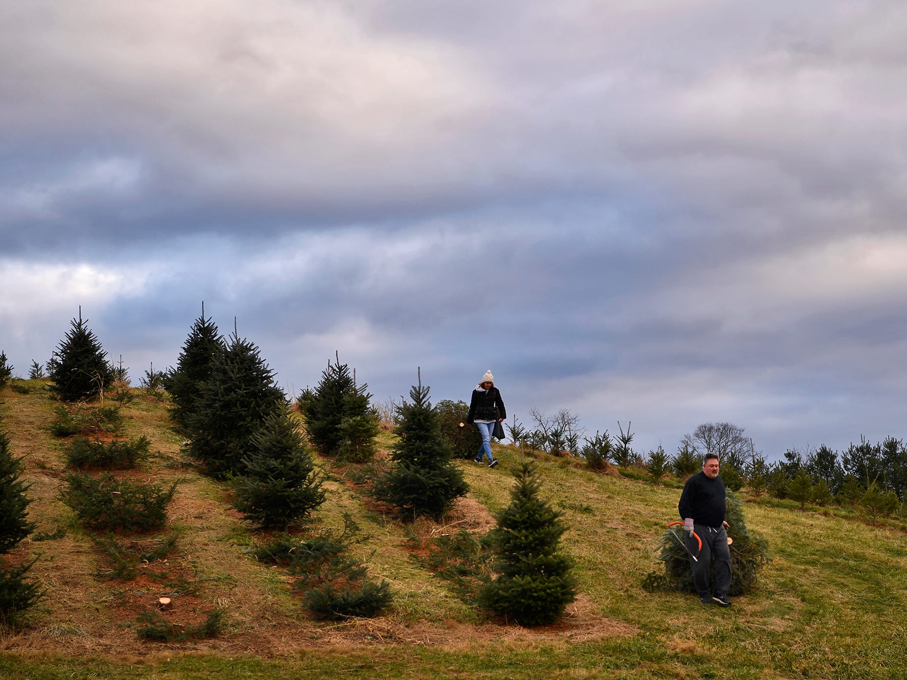 Families search McCurdy's Tree Farm in Dillsburg for the perfect Christmas tree, Monday, December 3, 2018. 