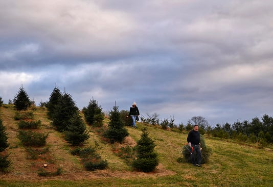 Searching For The Perfect Christmas Tree