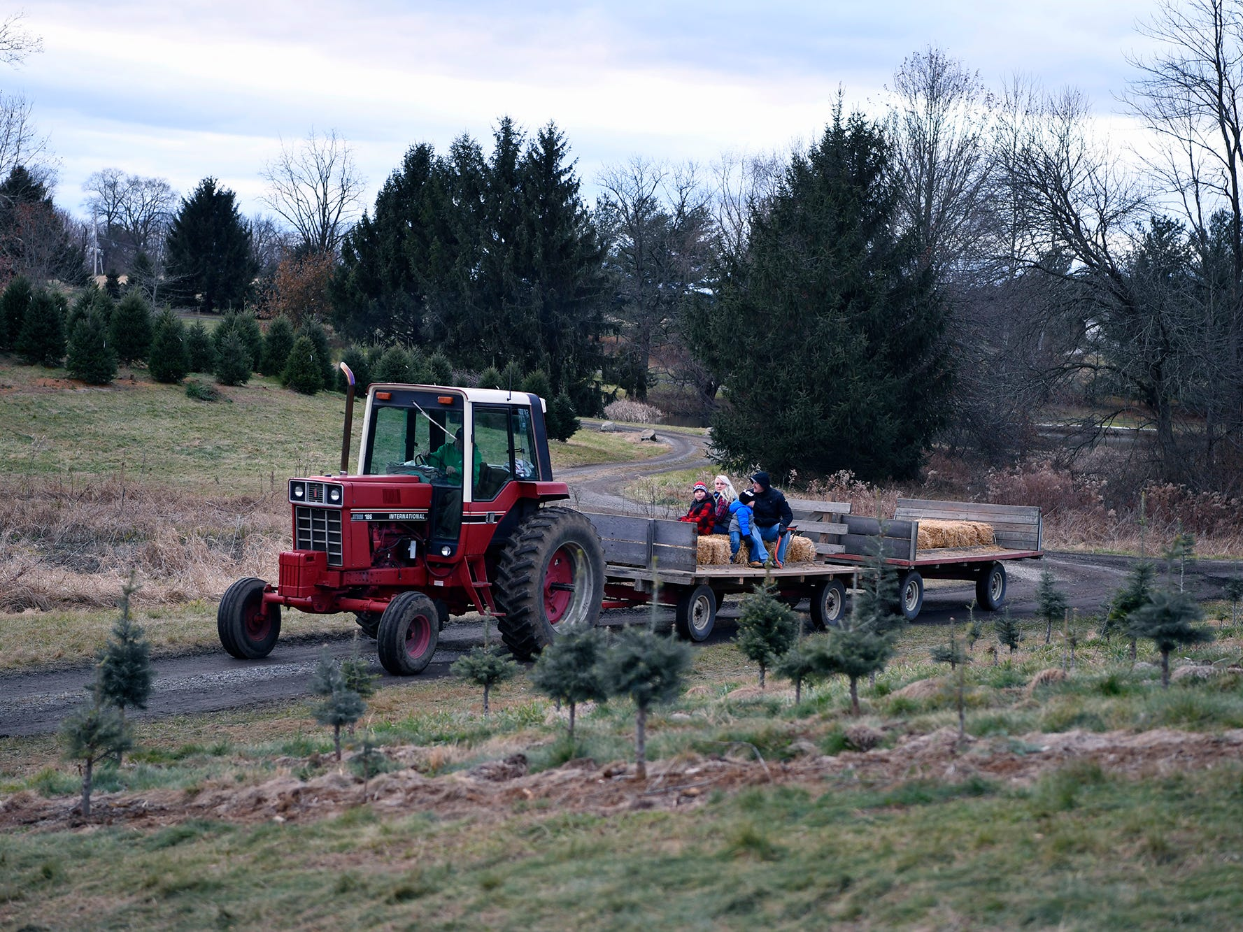 A tractor takes families out to search McCurdy's Tree Farm in Dillsburg for the perfect Christmas tree, Monday, December 3, 2018. 