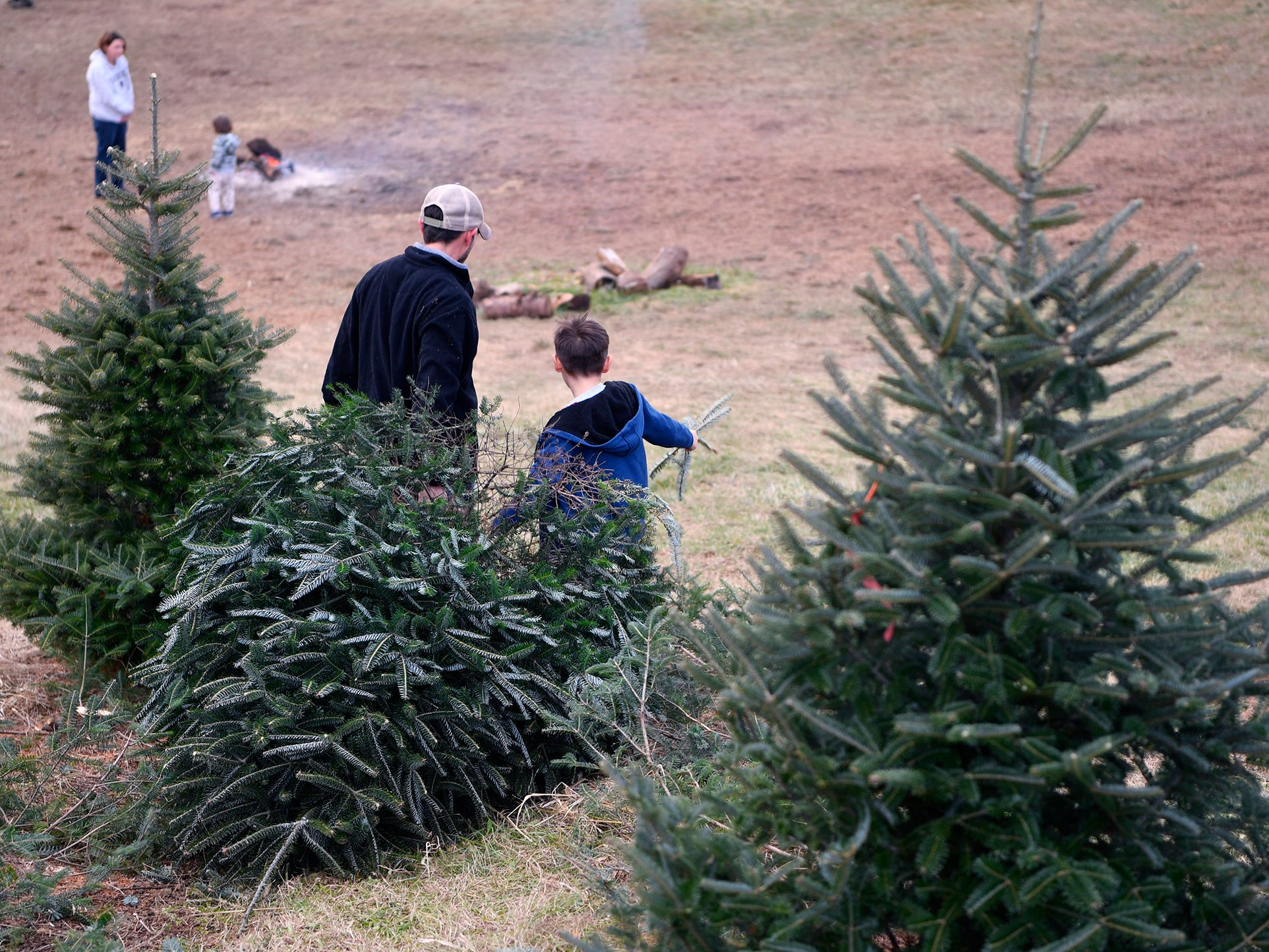 Brandon Kuykendall and his son River, 7, of Mechanicsburg drag their freshly cut Christmas tree to be picked up by tractor at McCurdy's Tree Farm in Dillsburg,  Monday, December 3, 2018. 