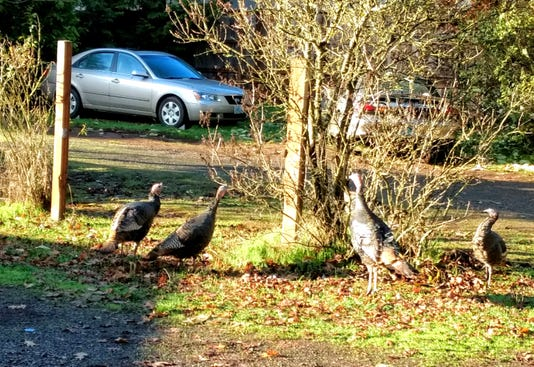 Ewald Turkeys
