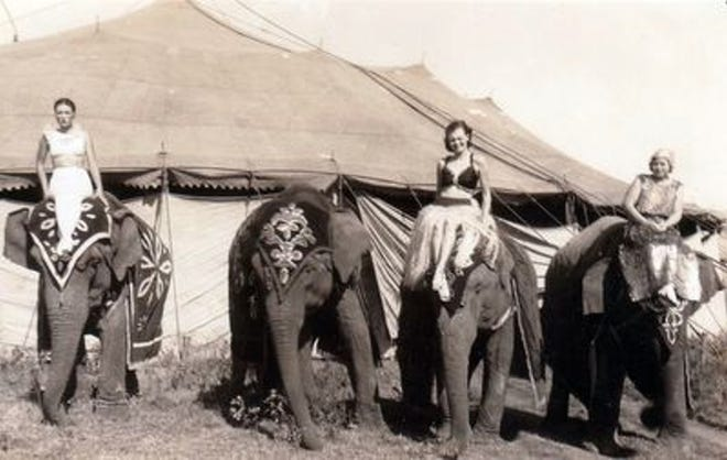 Russell Brothers circus elephants Rubber, Margaret, Sadie and Elsie in 1936.