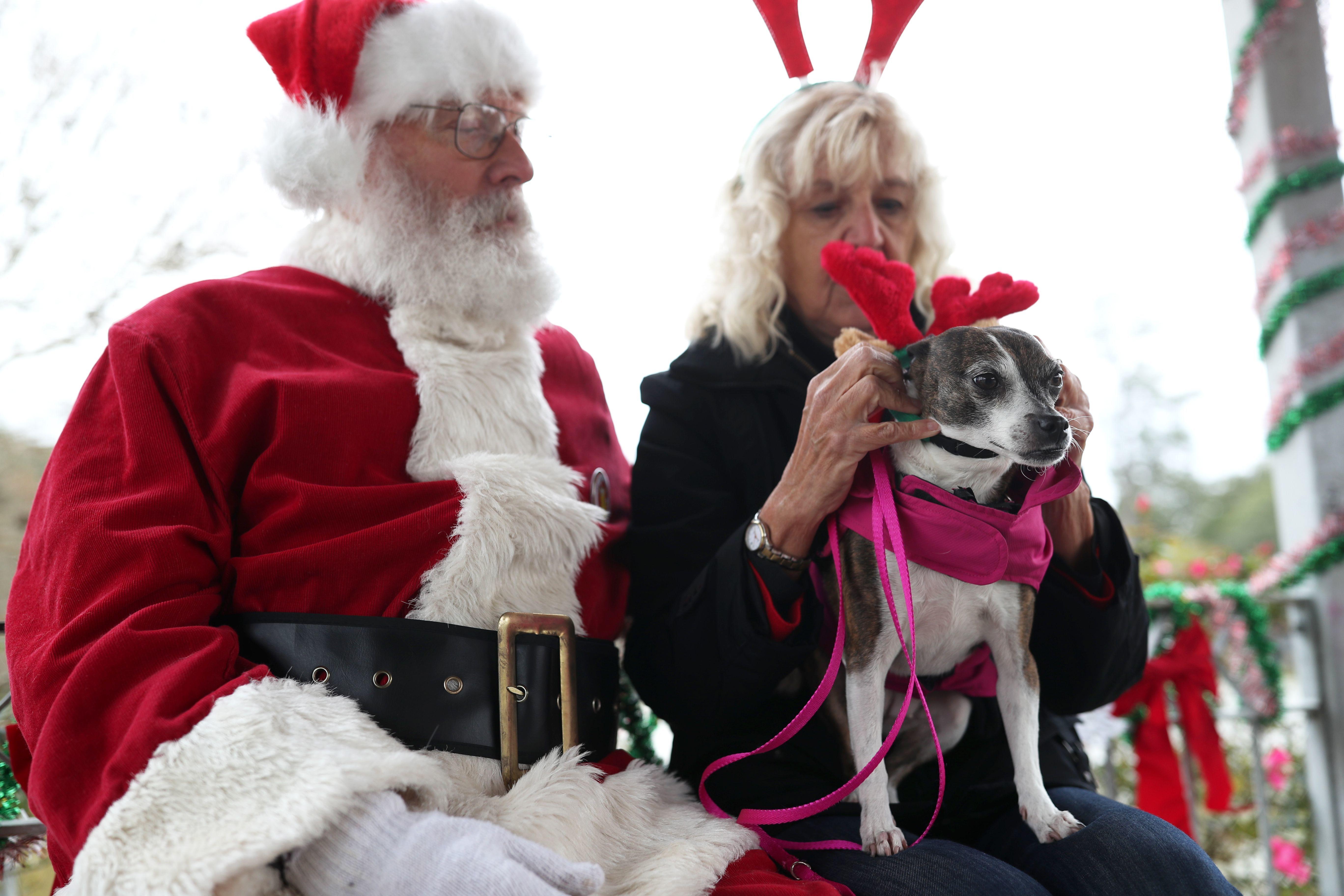 The 23rd Annual Santa Paws Walk barks to a start at 10 a.m. Saturday at Lake Ella.