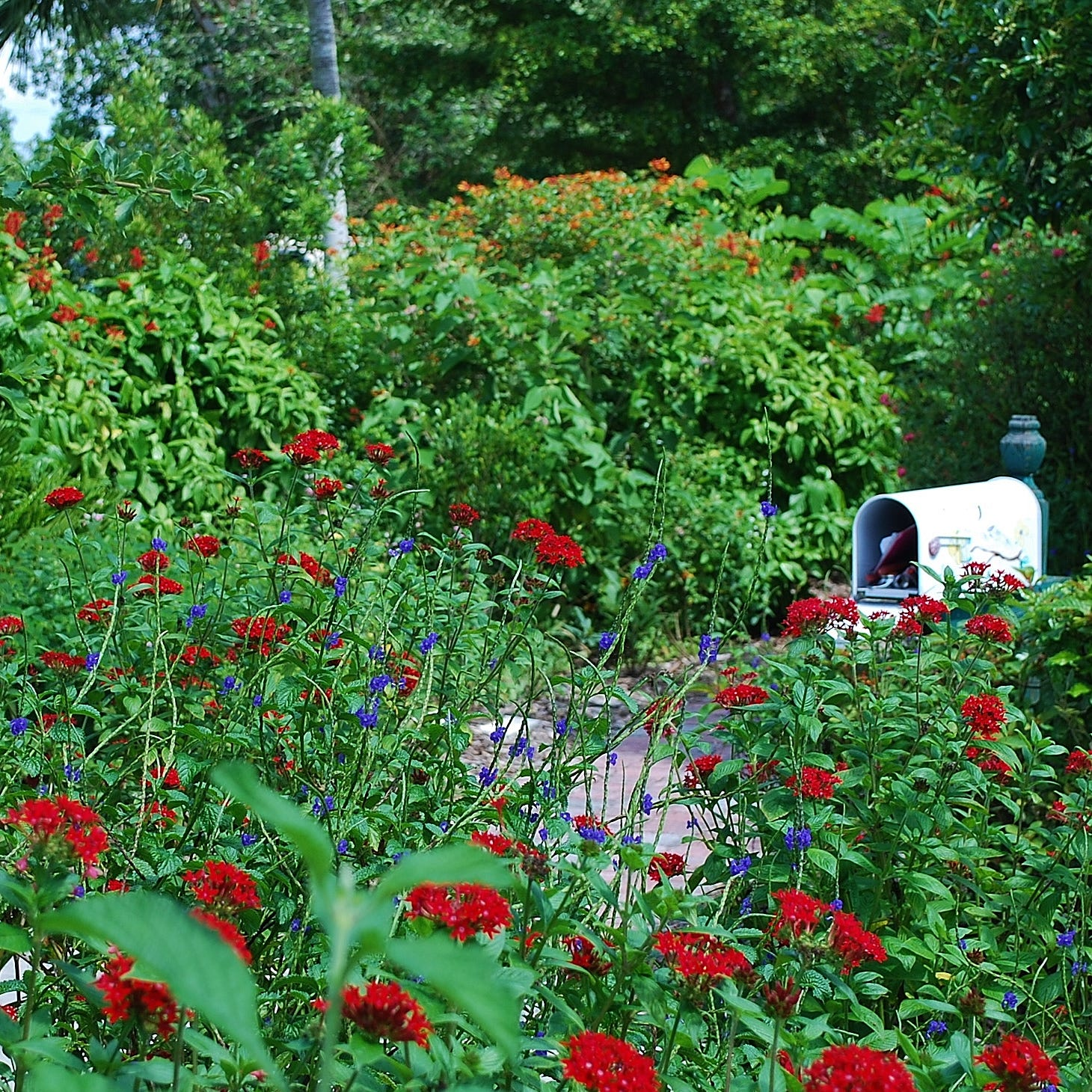 Gift garden and friendly pollinators by planting beneficial plants