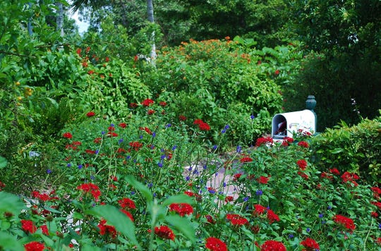 Planting flowers that attract birds, bees, and other critters is a gift to the plants they help reproduce.