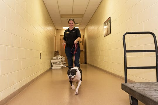 Charley arrives at the Humane Society of the Treasure Coast's shelter after being evacuated from her Beaufort, SC, shelter.