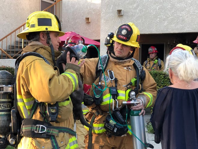 Ventura County firefighters successfully resuscitated a cat Monday afternoon at a kitchen fire in a Camarillo apartment complex.