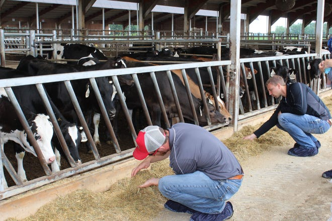 Visitors to Pagel's Ponderosa Dairy   are required to wear disposable boot covers while visiting any area of the farm.