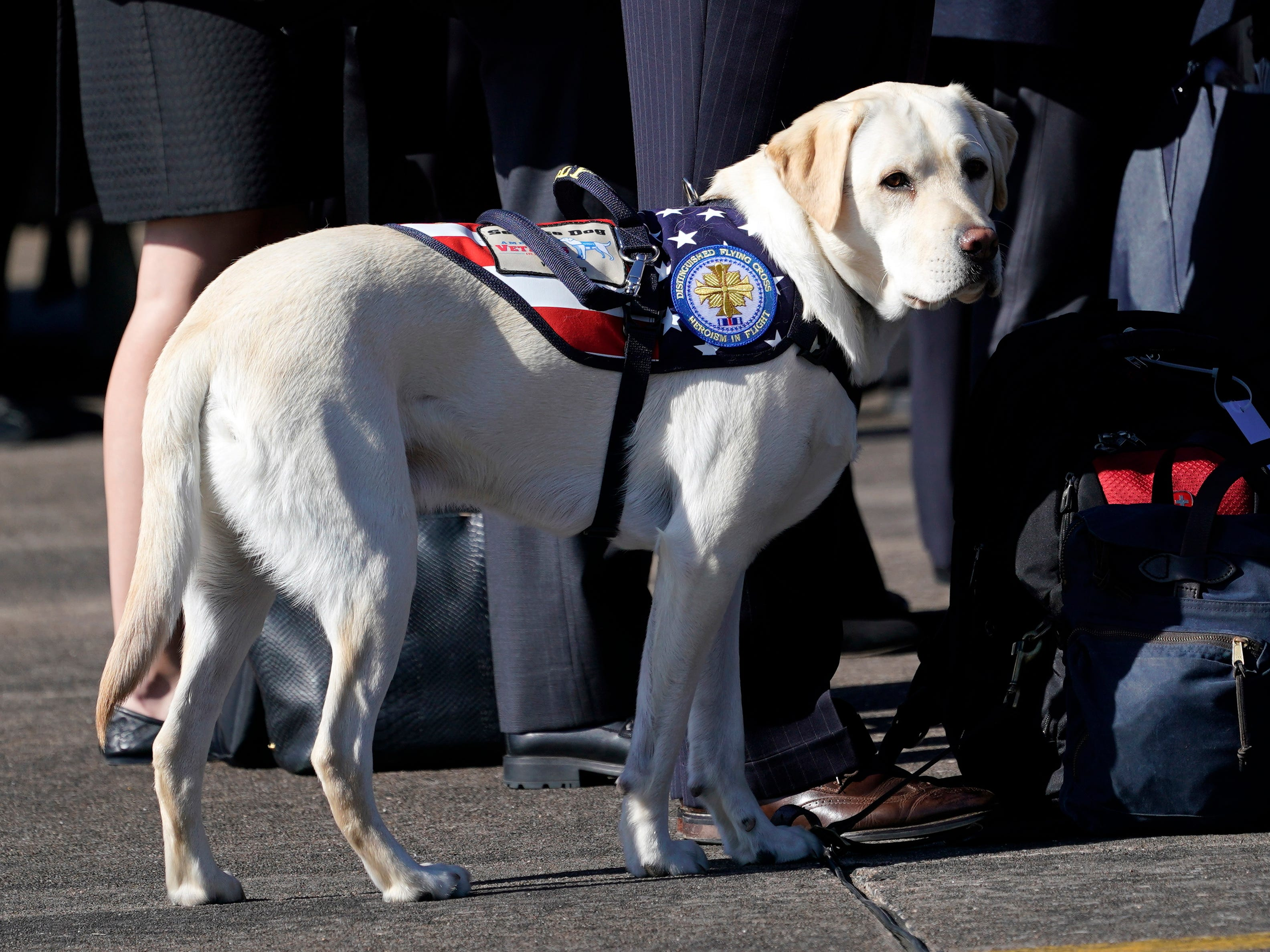 epa07206627 Sully, the yellow Labrador retriever who was former US President George H.W. Bush service dog during a departure ceremony at Ellington Field in Houston, Texas, USA, 03 December 2018. George H.W. Bush, the 41st President of the United States (1989-1993), died at the age of 94 on 30 November 2018 at his home in Texas.  EPA-EFE/David J. Phillip / POOL ORG XMIT: TXDP402