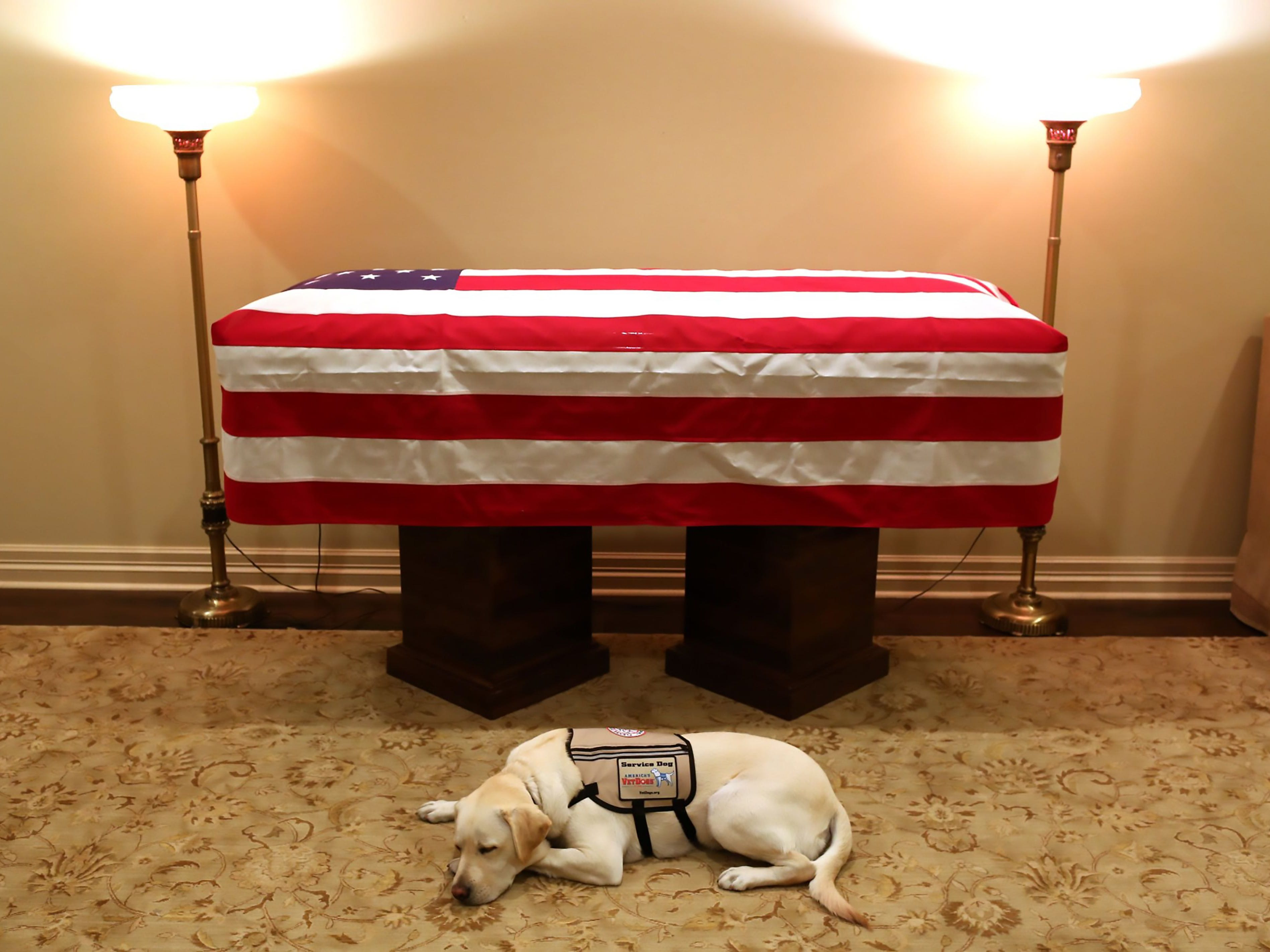 """TOPSHOT - This handout photograph obtained December 3, 2018 courtesy of the Office of George H.W. Bush, shows the yellow Labrador retriever Sully, the late former US president's faithful service dog, lying in front of Bush's casket on December 2, 2018 in Houston, Texas. - A US president is believed to have said the easiest way to find a friend in Washington was to get a dog. On Monday, December 3, 2018, George H.W. Bush's faithful service dog Sully made a final journey back to the US capital with the late president. Two days after Bush's death at age 94, family spokesman Jim McGrath posted a touching photograph of the yellow Labrador retriever lying down in front of Bush's casket, with the accompanying phrase """"Mission Complete"""" and the hashtag #Remembering41. The two-year-old Sully has been at Bush's side since June, just weeks after the death of the president's wife Barbara, to whom he was married for 73 years. (Photo by Evan Sisley / Office of George H. W. Bush / AFP) / == RESTRICTED TO EDITORIAL USE  / MANDATORY CREDIT:  """"AFP PHOTO /  Office of George H.W. Bush / Evan SISLEY"""" / NO MARKETING / NO ADVERTISING CAMPAIGNS /  DISTRIBUTED AS A SERVICE TO CLIENTS  ==EVAN SISLEY/AFP/Getty Images ORG XMIT: Service d ORIG FILE ID: AFP_1BB6J0"""