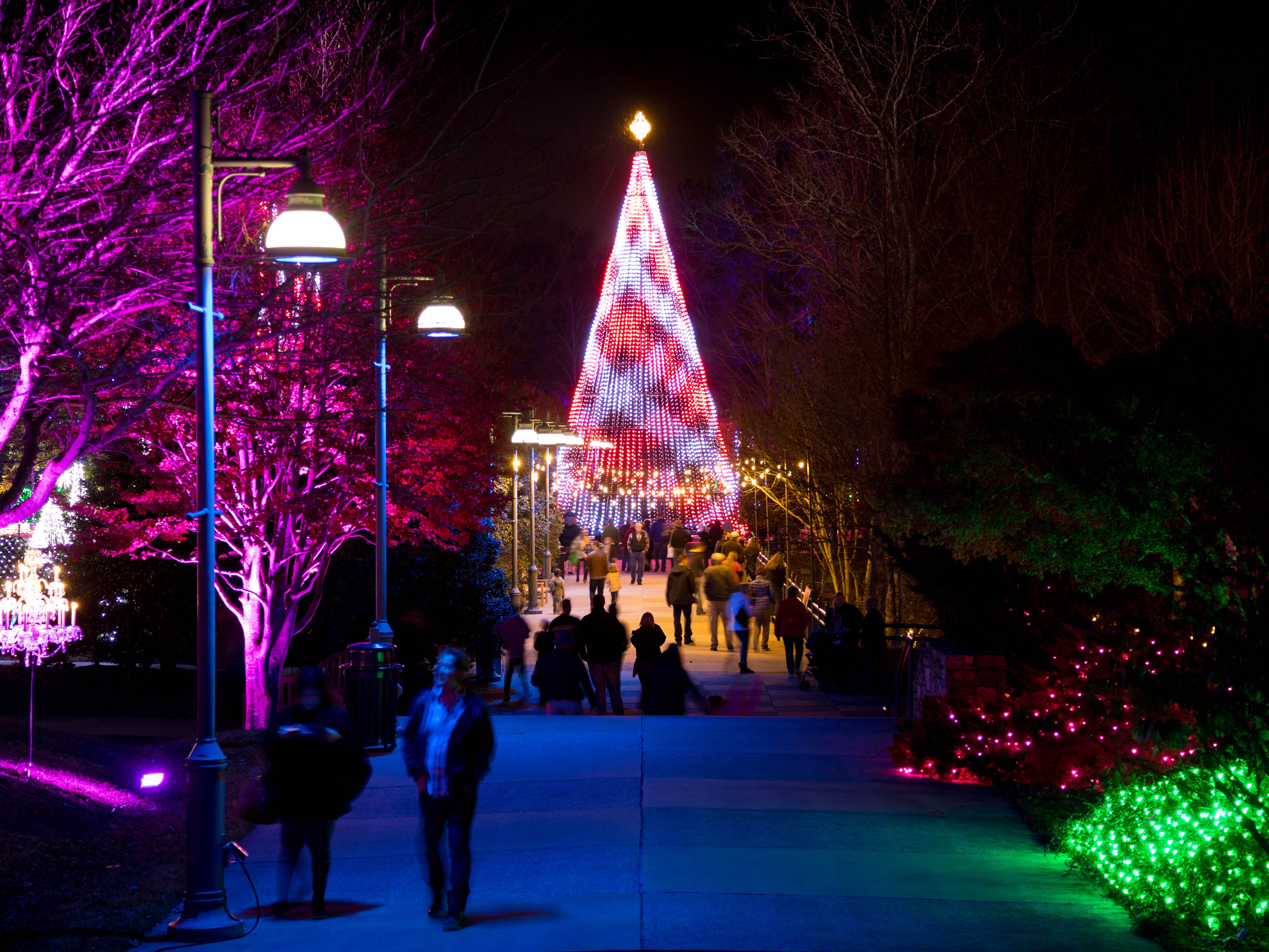 """Are you more of an urban traveler? Besides the Biltmore Estate, cosmopolitan Asheville – a top-ranked foodie-destination – also is home to the North Carolina Arboretum, which displays live Frasers. Nov. 16 through Dec. 31, the state-owned facility offers a """"Winter Lights"""" after-dark illumination of its conifers."""