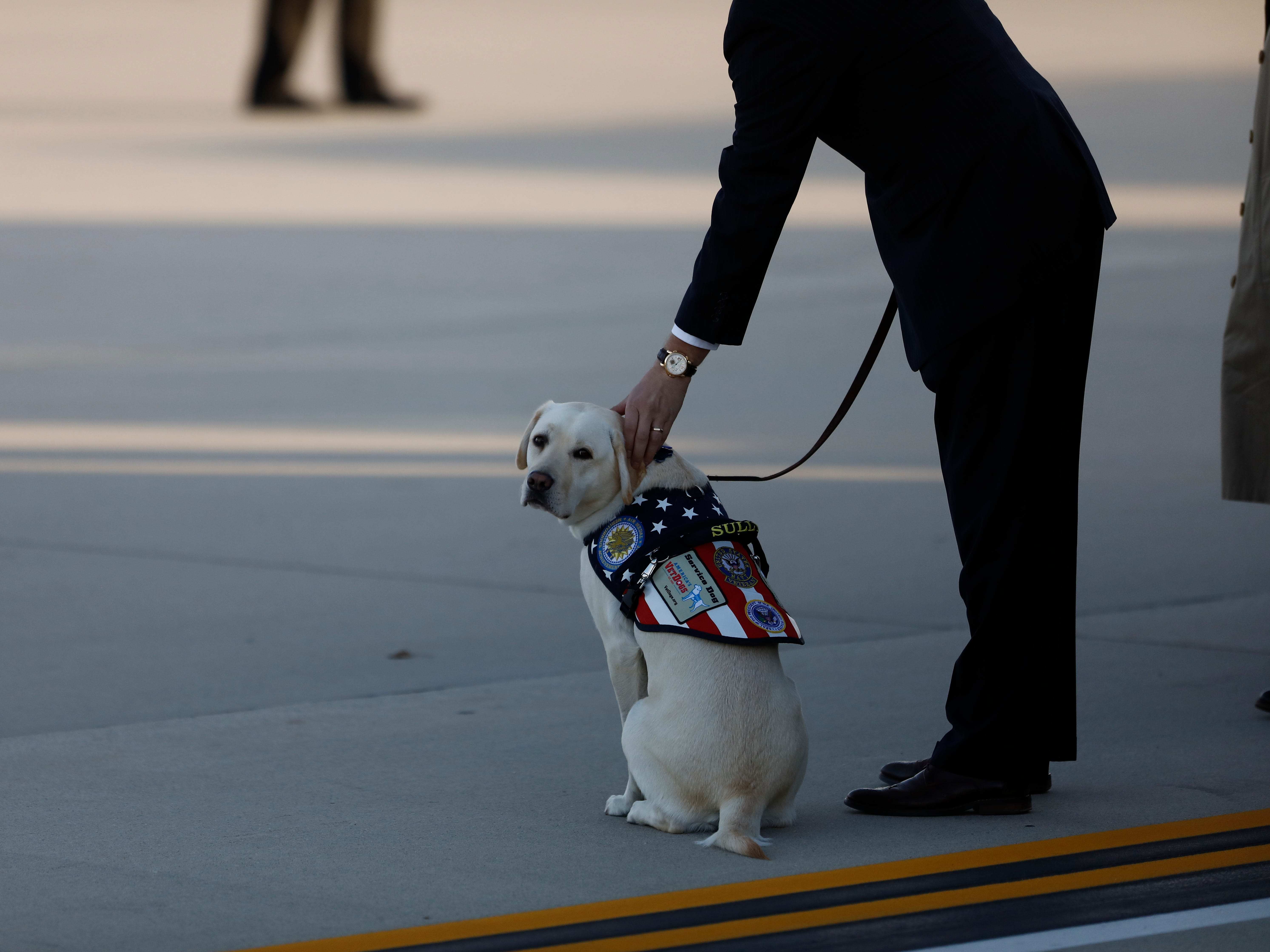 epa07206894 Sully, former US President George H. W. Bush's service dog on the tarmac before Joint service members of a military casket team carry the casket of former US President George H. W. Bush from Special Air Mission 41 to the waiting hearse at Joint Base Andrews, USA, 03 December 2018. Bush will lie in state in the Capitol Rotunda before his state funeral at the Washington National Cathedral 05 December. George H.W. Bush, the 41st President of the United States (1989-1993), died at the age of 94 on 30 November 2018 at his home in Texas.  EPA-EFE/TING SHEN ORG XMIT: TSX07