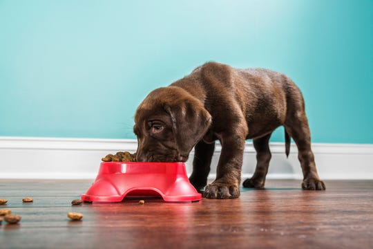 Several dry dog food brands have excessive and potentially toxic levels of vitamin D, according to the U.S. Food and Drug Administration. The FDA is recalling the products.