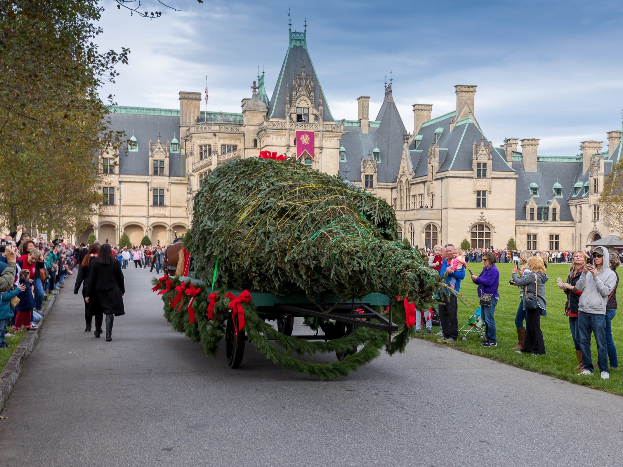 In North Carolina, the Fraser is also the display tree at Biltmore Estate, one of the state's top attractions. A holiday promotion is built around the arrival and display of the tree. This photo shows the arrival of the 2017 Fraser.