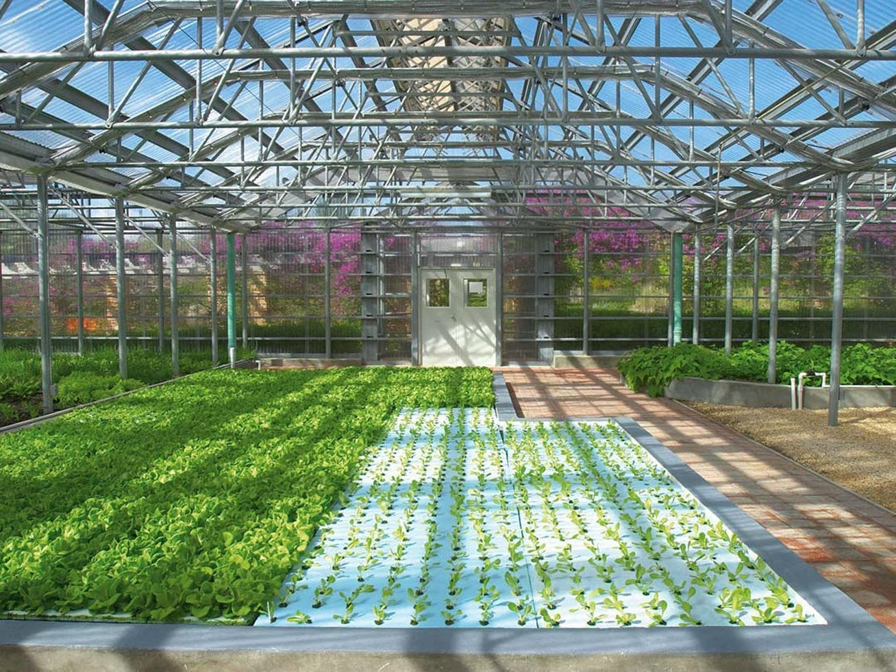The hydroponic farm at CuisinArt Golf Resort & Spa.