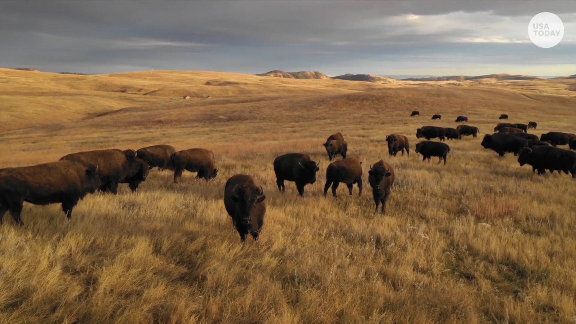 Travel back in time in wild, wonderful South Dakota