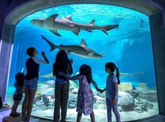 OdySea Aquarium in Scottsdale, Arizona.