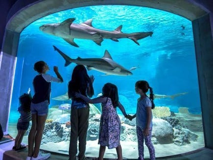 Aquarium memberships are the gifts that your kids can experience for the whole year.