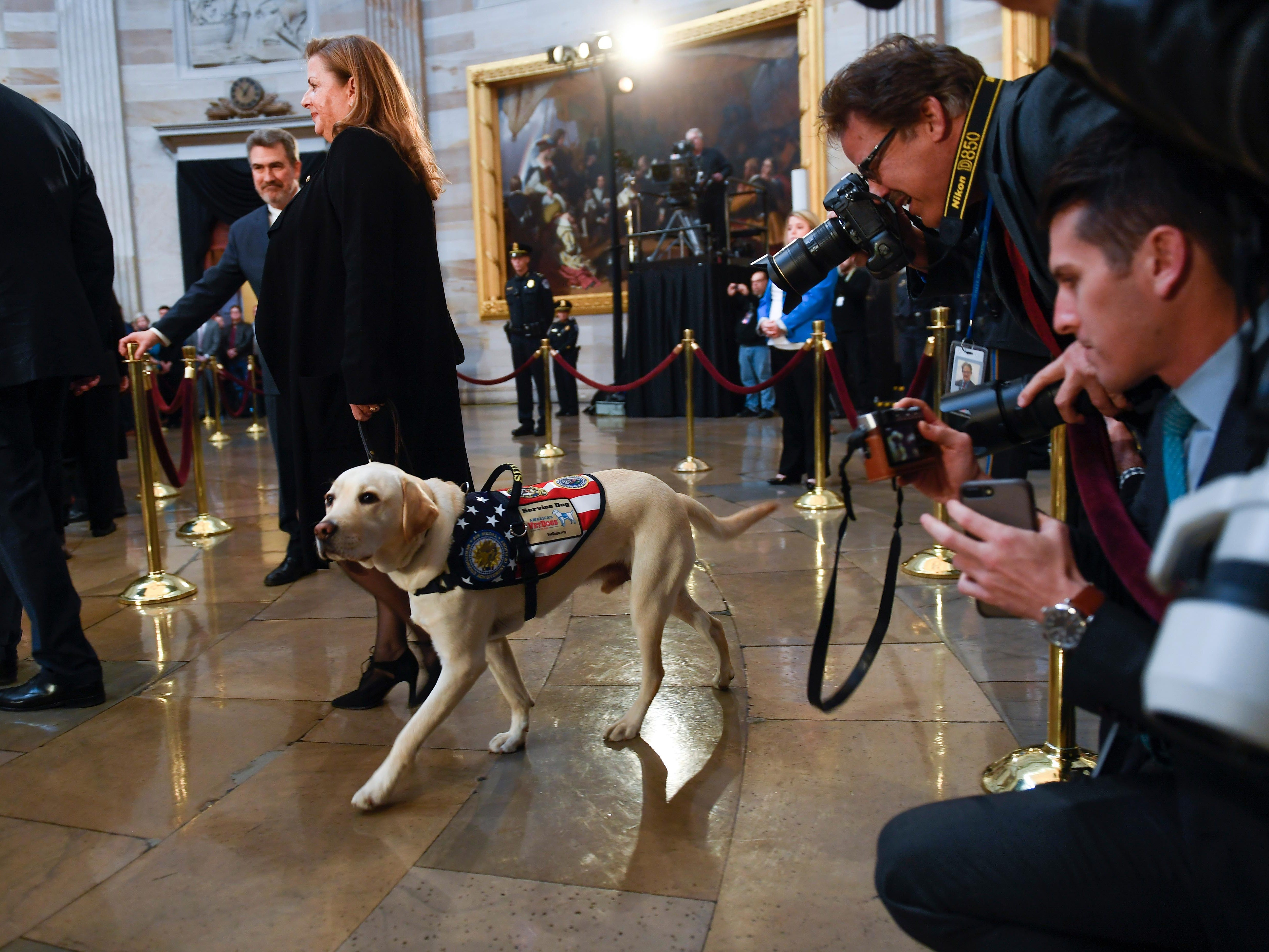 Dec 4, 2018;  Washington, DC, U.S.A; President George H.W. Bush's service dog Sully with Valerie Cramer of America's VetDogs at the U.S. Capitol to honor late president. Sully, a service dog trained by America's VetDogs, will join Walter Reed National Military Medical Center's Facility Dog Program after the holidays. President George H.W. Bush lies in state at the U.S. Capitol Rotunda. Mandatory Credit: Jack Gruber-USA TODAY ORIG FILE ID:  20181204_ajw_usa_020.jpg