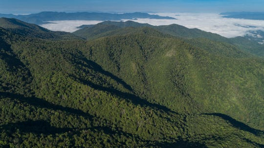 Mainspring was able to purchase the 470-acre Shut-In Creek tract in Jackson County with CWMTF money. It is part of a larger effort to conserve 912 acres bordering the Town of Sylva's Pinnacle Park and other lands in the Waterrock Knob area of the Blue Ridge Parkway.