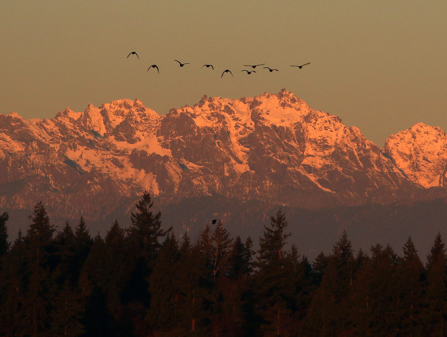 A flock of birds hovers over the Olympic Mountains at sunrise on December, 5, 2018, from Lions Park in Bremerton.