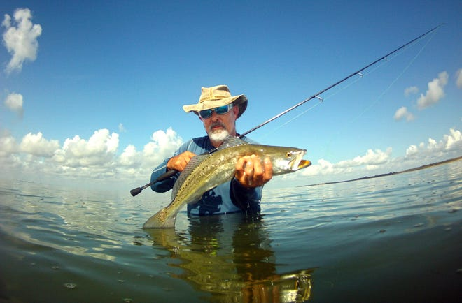 The spotted sea trout or speckled trout is the most popular saltwater game fish in Texas.