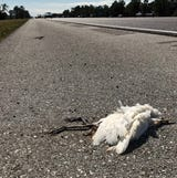 Officials don't know what's killed the birds, which line both sides of I-75 in south Lee and north Collier counties.