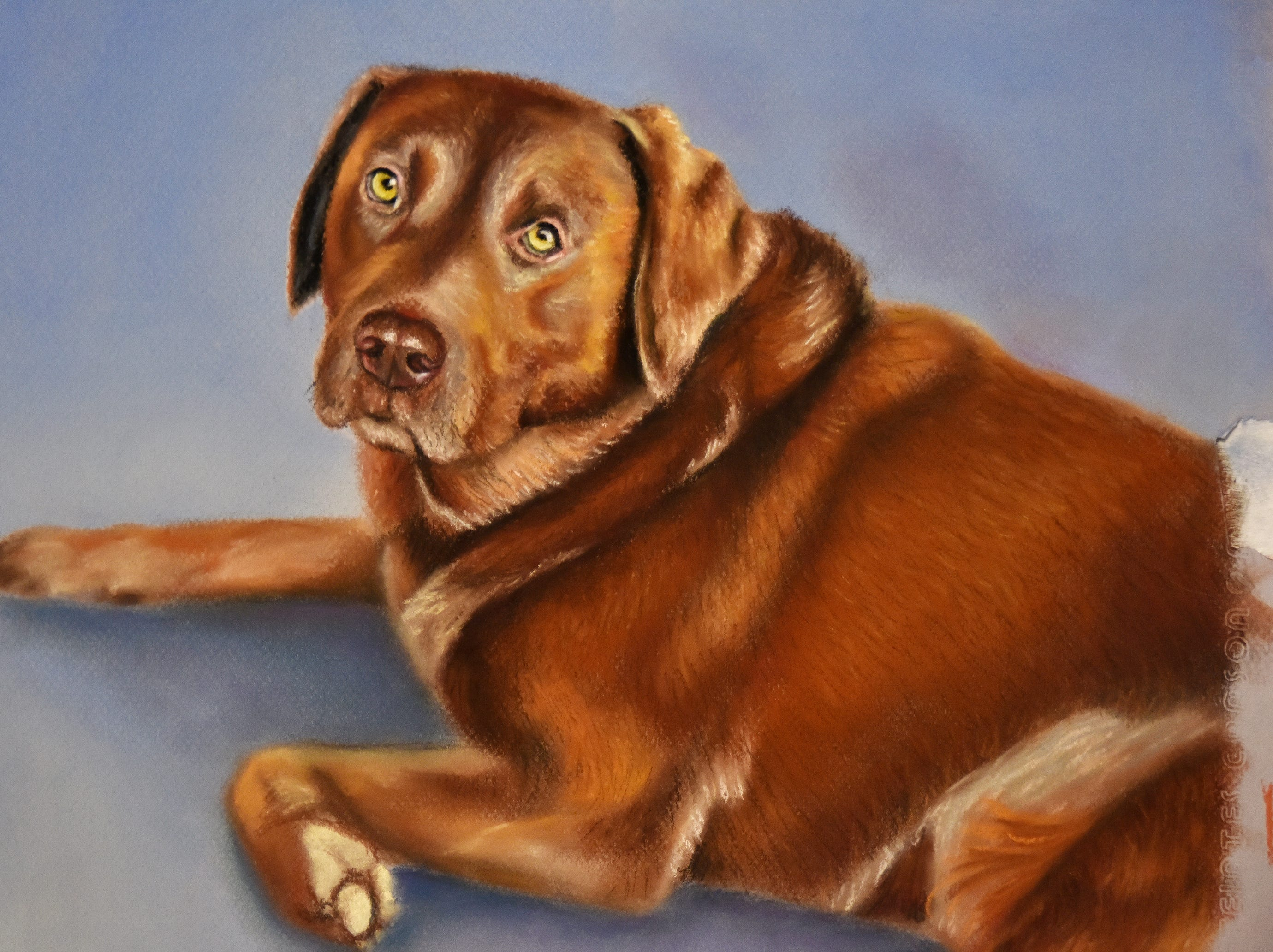 A finished pet portrait by Olivia White hangsat her home studio in Anderson