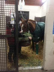 Lexington police horse Yoder got his shoe stuck in a manhole on his way to the Christmas parade.