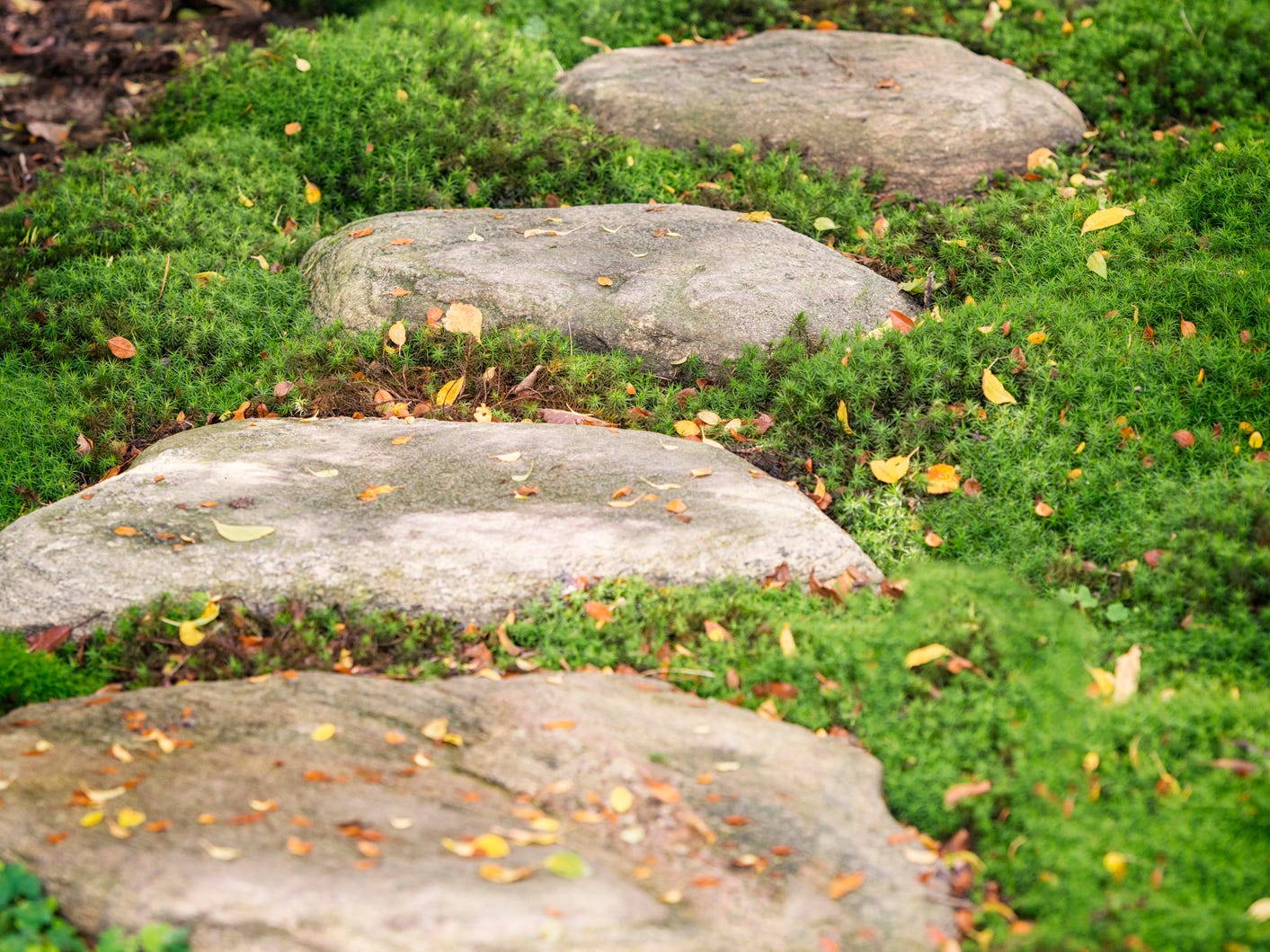 Gardening: Best to care for your landscape, not trample it