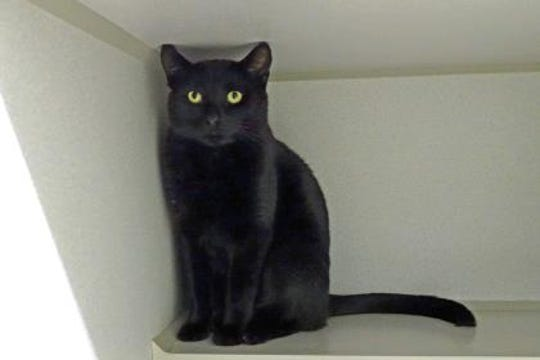 Wilson is a 2 1/2 -year-old neutered male. He was found on someone's porch in Alto.