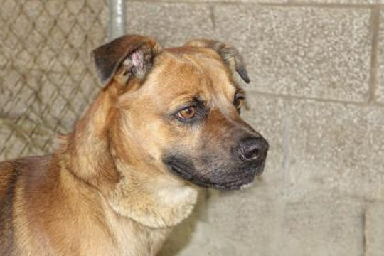 Rupert is a spunky 2-year-old Shepherd mix, who was a stray from Carrizozo.