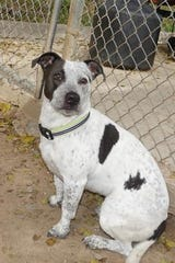 Mija is a smart, 1-year-old female who loves going out for walks.